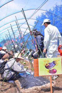 0515里山農業体験イベント 重点園芸作物ナスを知って(1)