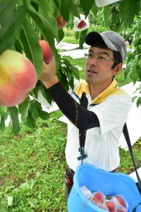 0621とよたの桃収穫開始(00)