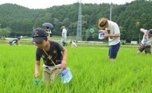 0630赤とんぼ米生き物観察会(1)