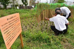 0913特別栽培米「赤とんぼ米」を行政と協力し、栽培収穫(1)