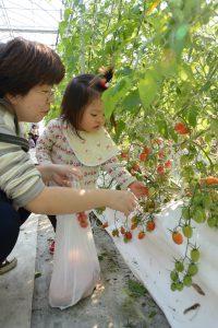1110ミニトマト収穫体験&ピザ作り(1)